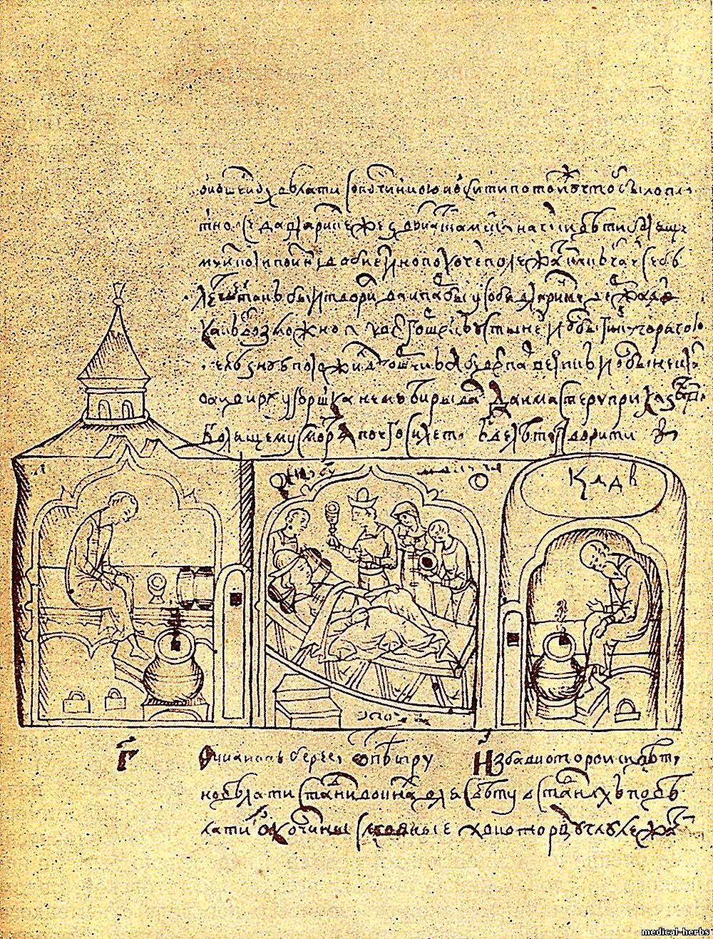 нужно древние травники лечебники картинки наше время дачах